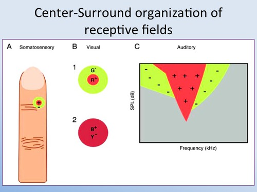 on off receptive fields