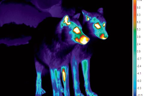 Infrared thermal image